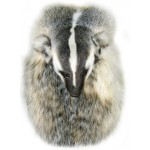 Badger, Head on Sporran